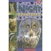 Schol Reader Level 2: Night Creatures
