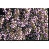 Farfalla - Thymian, Chemotyp Linalol, kbA, 5 ml 5