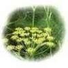 Herbatrend édeskömény-termés gyógynövénytea, 40 g