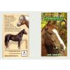 A lovak (Földünk állatvilága sorozat)