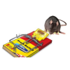 The Big Cheese fa patkánycsapda csalogató kapszulával