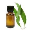 Eukalyptus citromos illóolaj (Eucalyptus citriodora) - 10 ml