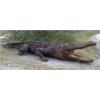 Krokodil-320cm