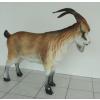 Kecske-90 cm-hegyi kecske
