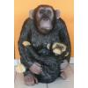 Csimpánz-kölyökkel