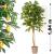 OEM Műnövény - Citromfa 184 cm