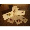No-name Képeslap borítékkal+ajándékkísérő kártya vegyes <180db/dob>
