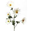 Margaréta 5 virággal