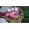 Fészkelő madár tojásokkal