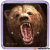 Cheatwell Games Ball Puzzles Magna Grizzly medve logikai játék
