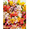 Perui liliom virágcsokor