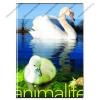 Animals pet - Hattyú és kacsa kockás füzet, A/4