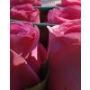 Fehér közepes henger rózsa box rózsaszín rózsákkal