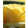 Fehér nagy henger rózsa box sárga rózsákkal