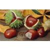 Herbamedicus Vadgesztenye balzsam, Herbamedicus 250 ml