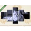 Képáruház.hu Fekvő szibériai macska az asztalon(135x70 cm, S01 Többrészes Vászonkép)