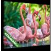 Képáruház.hu Premium Kollekció: Pink flamingos(25x20 cm, vászonkép)