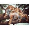 Kifestő készlet akrilfestékkel, ecsettel, gyerekeknek 11 éves kortól - 30x40 cm - Afrikai leopard