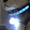 Kutyakellék, Kutyalámpa, LED-es kutyavilágítás nyakörvre akasztható kivitelben (fehér)