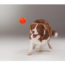 Liker narancssárga labda kutyáknak (5 cm) játék kutyáknak