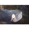 Pontec Pond Figure Mallard Duck female