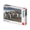 Puzzle 1000 db - Pingvinek