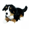 Rappa Salašnický pes ležící