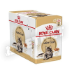 Royal Canin FBN Maine Coon Adult 12x85g