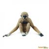 Safari Gibbon-Safari