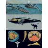 Stiefel Kék bálna oktatótabló