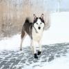 Trixie; Walker Kutyacipő Walker Active L 2db/Csomag